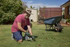 Domestic Home Gardening. A man weeding in his back yard, a summer activity and hobby for some and work for others Stock Photo