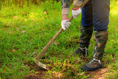 Man  weeding his garden with hoe. Stock Image