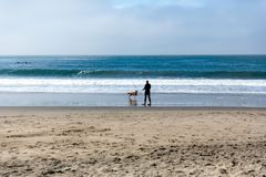 Man plays fetch with his dog at the beach. Man in a wetsuit plays fetch with his dog at the beach royalty free stock images
