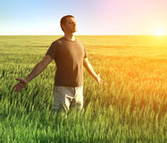 Man in wheat field Royalty Free Stock Image