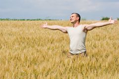 Man in wheat field. Young strong man with t-shirt in a wheat field Royalty Free Stock Image