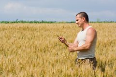 Man in wheat field Stock Photo