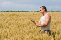 Man in wheat field Stock Photo