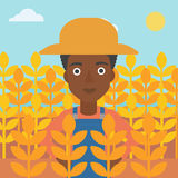 Man in wheat field. Royalty Free Stock Photos
