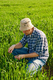 Man in wheat field Royalty Free Stock Photography