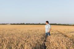 Man on wheat field Stock Photography
