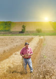 Man on the wheat field Stock Images