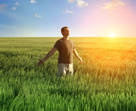 Man in wheat field and sunlight Royalty Free Stock Image