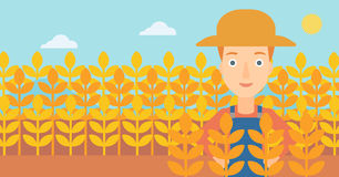 Man in wheat field. Royalty Free Stock Image
