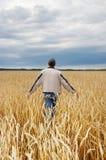 The man among a wheaten field Stock Image