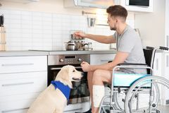 Man in wheelchair cooking with service dog. By his side indoors royalty free stock photo