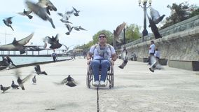 Man In Wheelchair  At Embankment With Pigeons. Slow motion shot of a handicapped man in wheelchair  walk at embankment with flock of pigeons stock footage