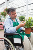 Man in wheelchair touching and admiring potted plant Royalty Free Stock Photography