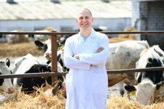 Man in a white coat on the cow farm royalty free stock photography