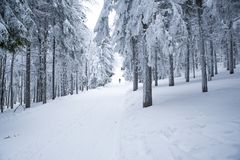 Man in white snowy winter nature. Photo with edit space. Magic forest Stock Photography