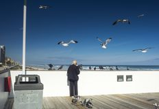 The man who fed the birds. This man fed seabirds like seagulls and pigeons. It`s not a thing to do. It was in Florida, U. S. A . winter 2016 royalty free stock photography