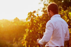 Man with wine in the vineyard Royalty Free Stock Images