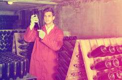 Man winery   working in aging section with bottle racks in cella. Attentive  friendly man winery employee wearing coat working in aging section with bottle racks Stock Photos