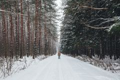 Man on a winter forest road Royalty Free Stock Image