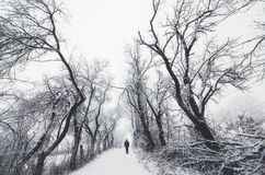 Man on winter road trough trees Royalty Free Stock Photos