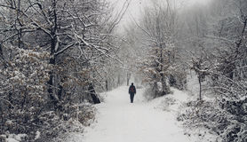 Man in winter wonderland woods. Man walking in winter wonderland woods with s now stock photo