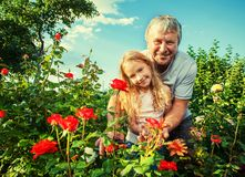 Man witn child caring for roses in the garden royalty free stock photos
