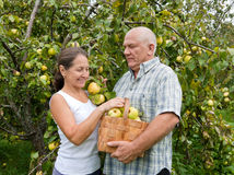 Man and woman with  basket of apples Royalty Free Stock Image