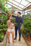 Man and woman buying plants in nursery shop Royalty Free Stock Photo
