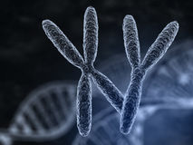 Man and woman chromosomes Stock Photo