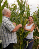 Man and woman with corn ears Stock Image