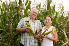 Man and woman with corn ears Royalty Free Stock Photos