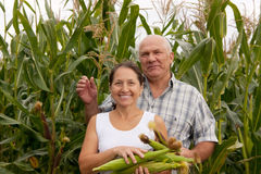 Man and woman with corn ears Stock Photo