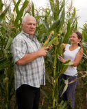 Man and woman in  corn field Stock Image