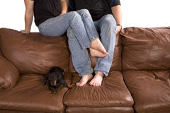 Man woman and dog on back of couch Royalty Free Stock Photo