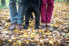 Man woman and dog legs only, family Royalty Free Stock Image