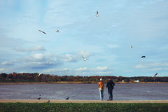 Man and woman feed seagulls. People feeding seagulls on the bay royalty free stock images