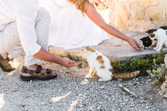 Man and woman feeding  cats in a park Royalty Free Stock Image
