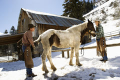 Man and Woman Grooming a Horse. On a snowy hillside in the country. Horizontal shot Stock Photo