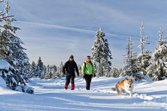 Man and woman hiking with dog in winter Royalty Free Stock Photo