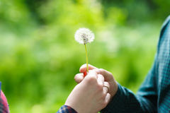Man and woman hold a dandelion Stock Photo