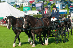Man and woman in horse and carriage Stock Images