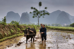 Man and woman plowed paddy field, using buffalo, Guangxi, China. Stock Photography