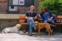 Man and woman resting on the bench with their dogs in Zandvoort Royalty Free Stock Photos