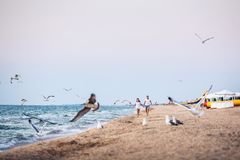Man and woman run along the shoreline and scare away seabirds. royalty free stock photos