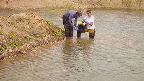 Woman ecologist taking samples of water. Man and woman scientist environmentalist standing in a river. Woman taking sample of water and pouring it into the test stock video