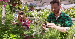 Man and woman seeding plants. Professional male and female horticulture workers taking care and seeding plants in the garden together stock footage