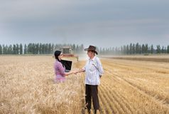Man and woman shaking hands at harvest Stock Images