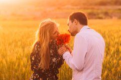 Man and woman smells bouquet of poppies in wheat field on the dusk. Man and women smells bouquet of poppies in wheat field on the dusk, Malta royalty free stock photos