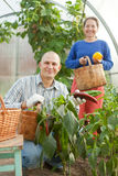 Man and woman in vegetable plant Royalty Free Stock Photos