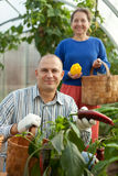 Man and woman in vegetable plant Stock Photography